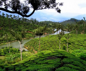 Muvattupuzha: beste reistijd om te gaan